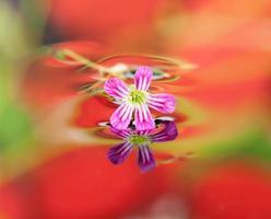 lindas flores refletidas na água foto