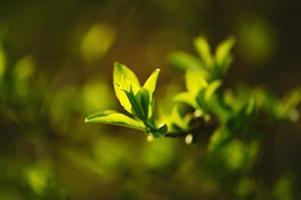 folhas verdes ensolaradas