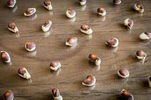 chocolates de conchas do mar foto