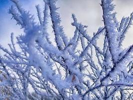 galhos de árvores nevadas foto