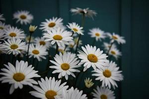 fotografia de foco raso de flores brancas foto