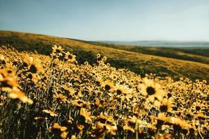 campo de margaridas durante o dia foto