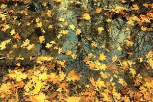 fundo de outono com folhas de bordo foto