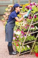 trabalhador do viveiro cortando flores foto