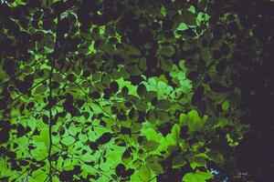 plantas de folhas verdes foto