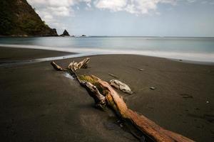 madeira flutuante na praia de areia preta foto
