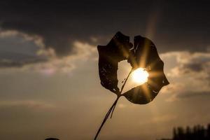 silhueta de uma folha