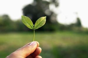 segurando a folha na mão