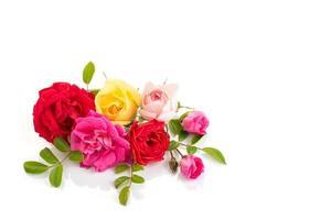 variedade de rosas em um fundo branco