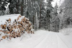 inverno na floresta foto