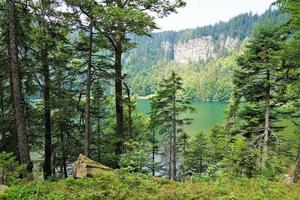 floresta e lago na Alemanha foto