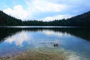 lago na floresta foto