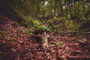 árvore caída em uma floresta