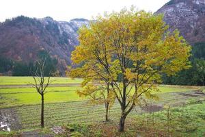 gokayama, japão abundante em recursos naturais, cultura e patrimônio