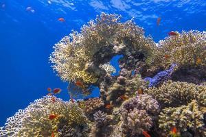recife de coral colorido foto