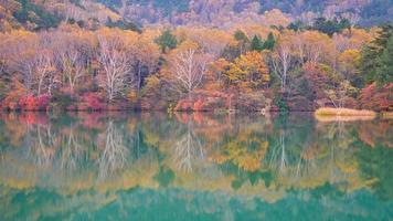 árvores coloridas e lagoa verde foto