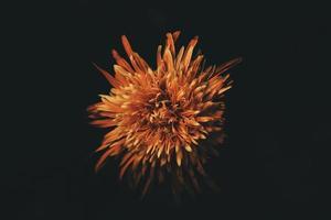 fotografia de foco seletivo de flor com pétalas de laranja