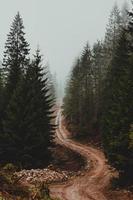 estrada de terra marrom sombria