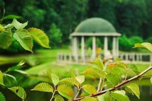 galho de árvore do parque foto