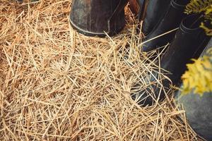 botas em uma cama de feno de fazenda foto