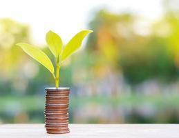 árvore crescendo de moedas