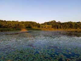 lagoa de lírios ao pôr do sol foto