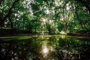 água em uma floresta