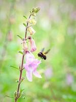 abelha em vôo