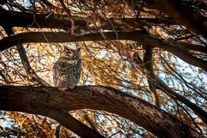 coruja em um galho de árvore foto