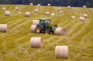 campo após a colheita foto