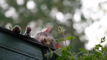 gato dormindo em um telhado