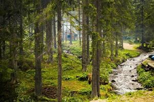 pequeno riacho na floresta nas montanhas dos Cárpatos foto