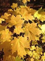 folhas de outono no chão foto