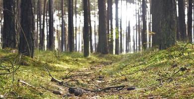 floresta de madeira no térreo