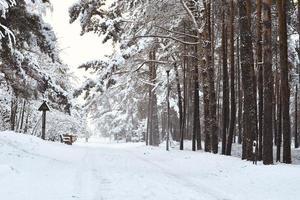 floresta de pinheiros nevados foto