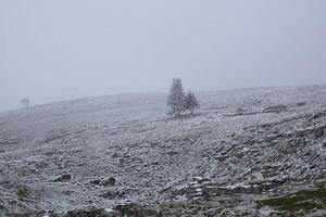 paisagem nevoenta de inverno