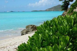 planta verde na praia