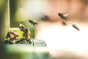 fotografia de foco raso de abelhas voando no ar