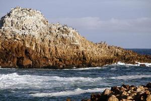 paisagem marinha rochosa na áfrica do sul