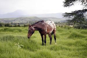 cavalo no campo natural
