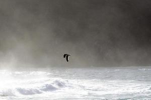 pássaro voando acima das ondas do oceano