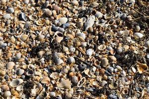 fundo de conchas de praia foto