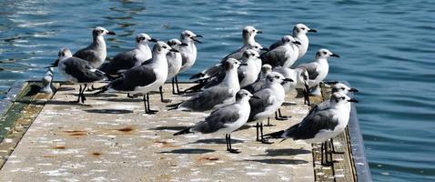 gaivotas na água foto