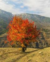 árvore solitária na temporada de outono
