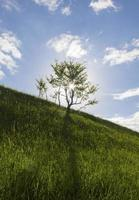 a árvore solitária e o sol foto