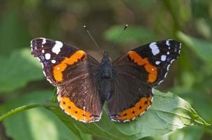 a borboleta está descansando
