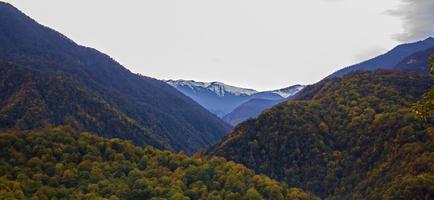 selva e montanhas nevadas