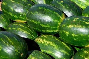 melancias para venda