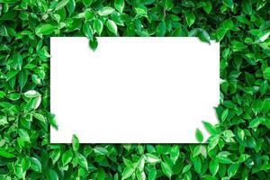 vista superior do papel em branco nas folhas verdes foto