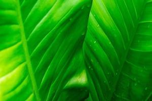 fundo de folha verde com gotas de chuva